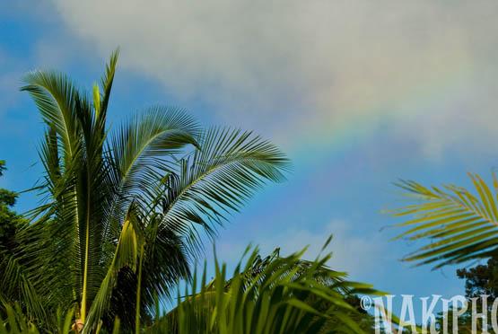 20091104_Kauai_V0512