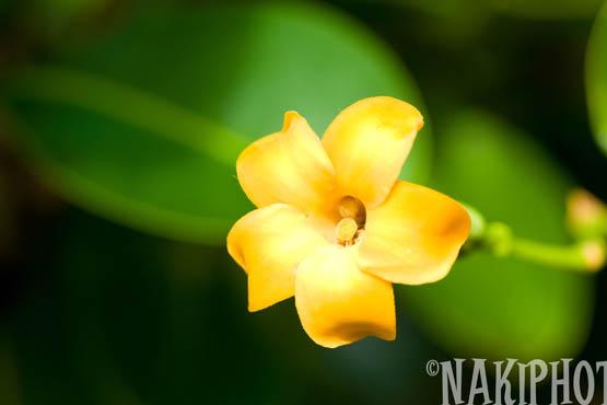 20091104_Kauai_V0514