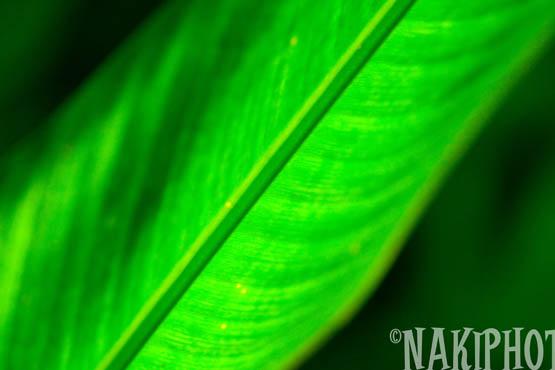 2009_Kauai_T0855