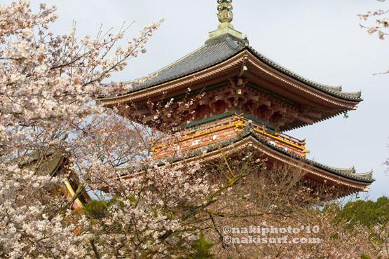 2010_Kyoto_Sakura_V0785
