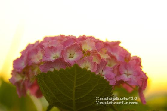 2010_IKI_T5681