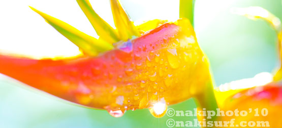 2010_NH_Flowers_T4271