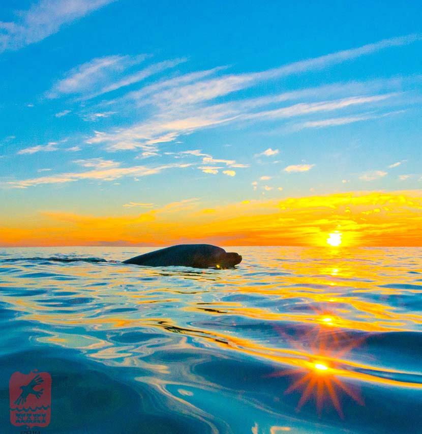 201312_Dolphin_2713