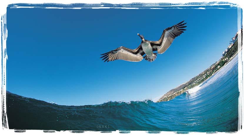 Pelican_8x12