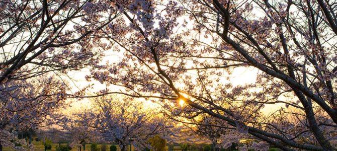 ブルームーンの桜はもと暗し_ノースハワイの小波パーフェクション_(1115文字)