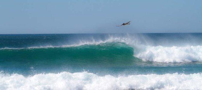【動画あり】波の夢_キャッチサーフオフィスでは_(1043文字)