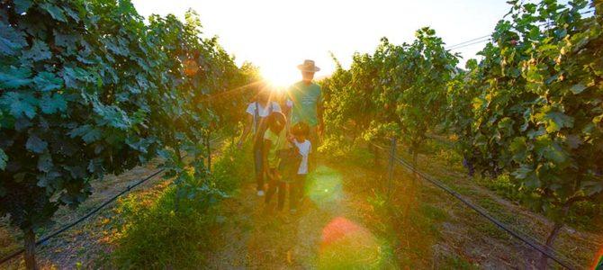 ワイン作りに人生をかけるベンチュラセイジ_ECサーフボード X デイブ・ネイラー_大谷翔平のMLBルーキーイヤー終盤_(1584文字)