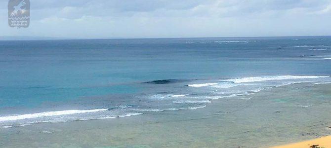 奄美大島にいる私は波の夢を見る_(954文字)