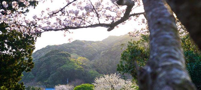 さよなら桜の伊豆_ボンザー3_父ちゃんのチャブ台_カセットガス式_(1430文字)