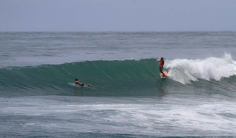 【サーフィン研究所】スティングの心象風景とニホンアカガエルとコニャックの色と香りと声_(1396文字)