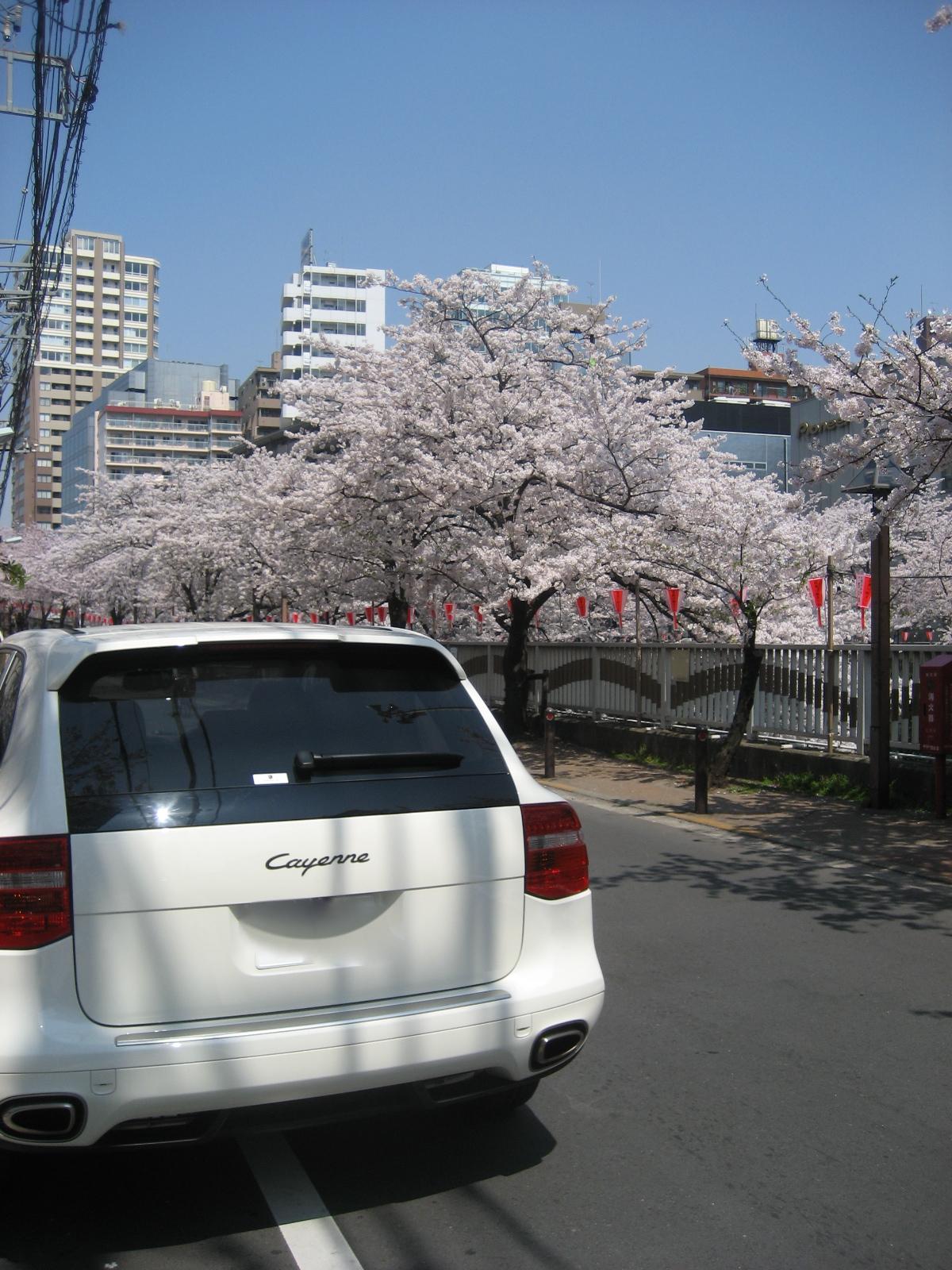週末を振り返る_月曜の日常は桜とカイエン_ふとしたきっかけで蘇る記憶_懐かしのHi-Standard