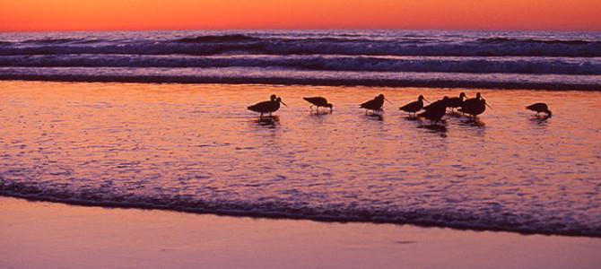 朝焼けの先にみえる素晴らしい波乗りライフ_1月はハッピーイベント盛りだくさん!!