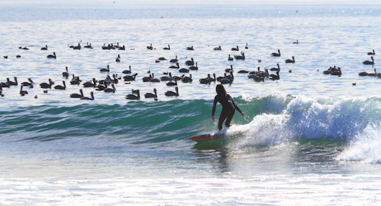 "【Surf Prescriptions (DOC)】FOURDOORS 5'10"" × 22 1/8"" × 2 3/8""_一回一回のパドリングはぐんぐん加速し、  緩慢なゆるゆるロング波にも安定性抜群の最速テイクオフ(by スタッフ)"